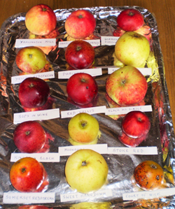 Variety of local Somerset apples