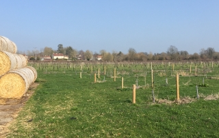 Harry's new orchard